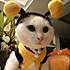 daogrs小厨娘蜜蜂